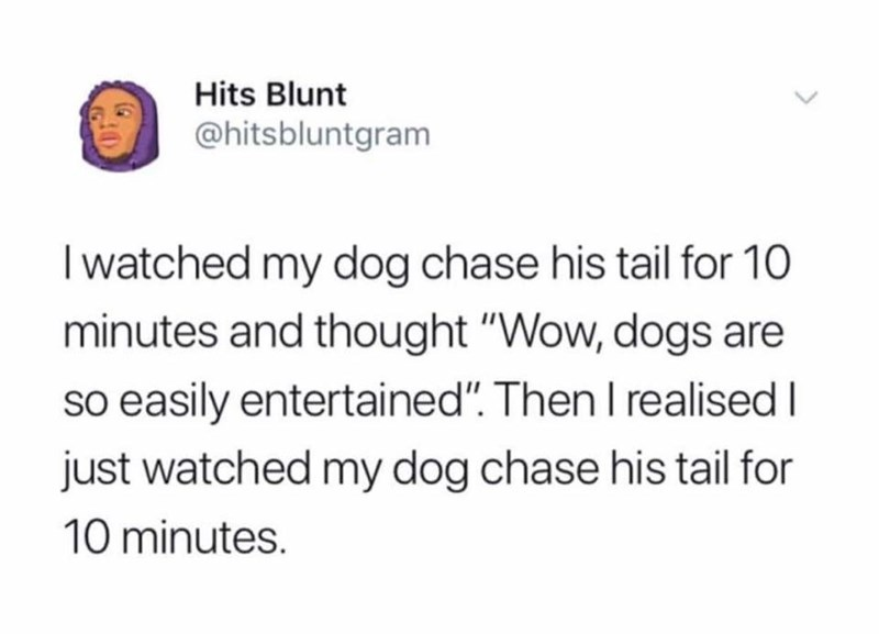 "Tweet that reads, ""I watched my dog chase his tail for 10 minutes and thought, 'Wow, dogs are so easily entertained.' Then I realized I just watched my dog chase his tail for 10 minutes"""