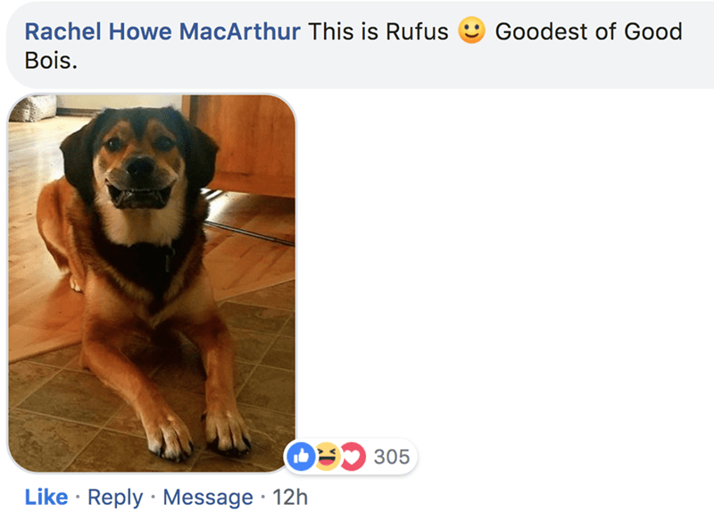 Dog breed - Rachel Howe MacArthur This is Rufus Goodest of Good Bois. O305 Like Reply Message 12h