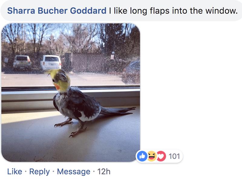Bird - Sharra Bucher Goddard I like long flaps into the window. 9101 Like Reply Message 12h