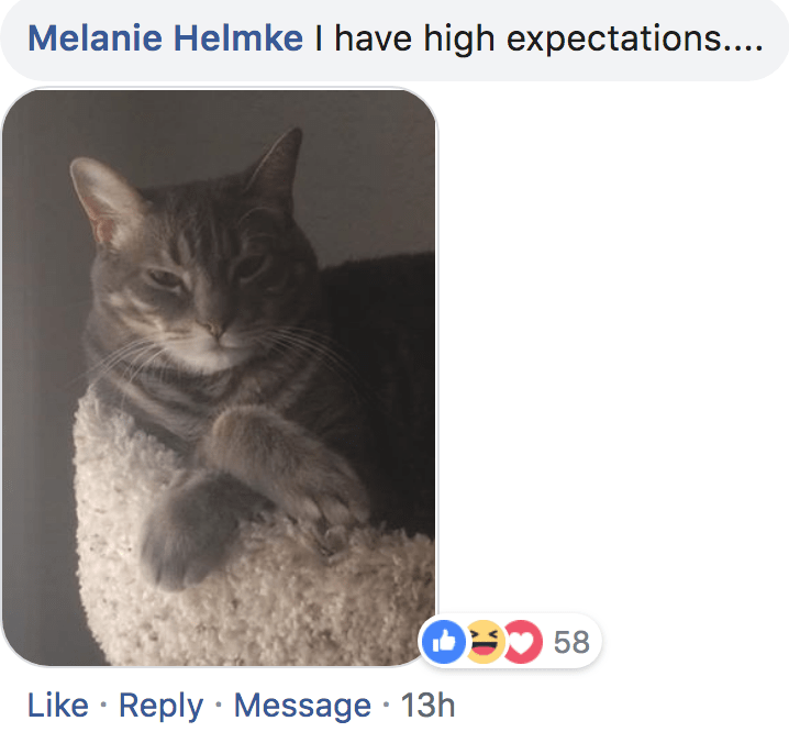 Cat - Melanie Helmke I have high expectations.... O58 Like Reply Message 13h