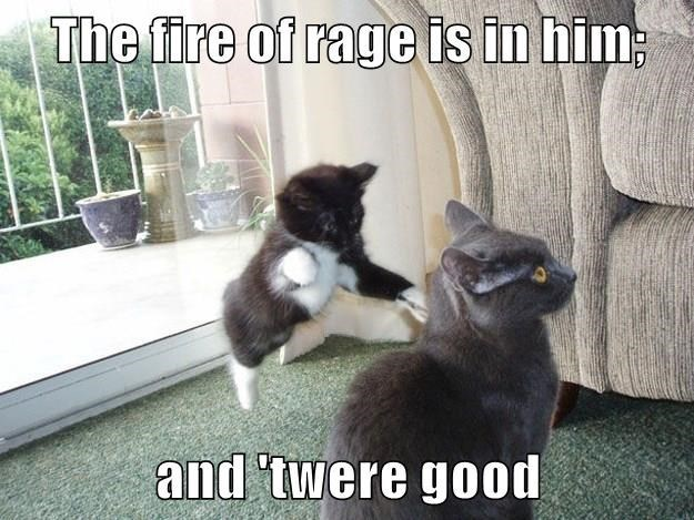 Cat - The fire of rage is in him and twere good