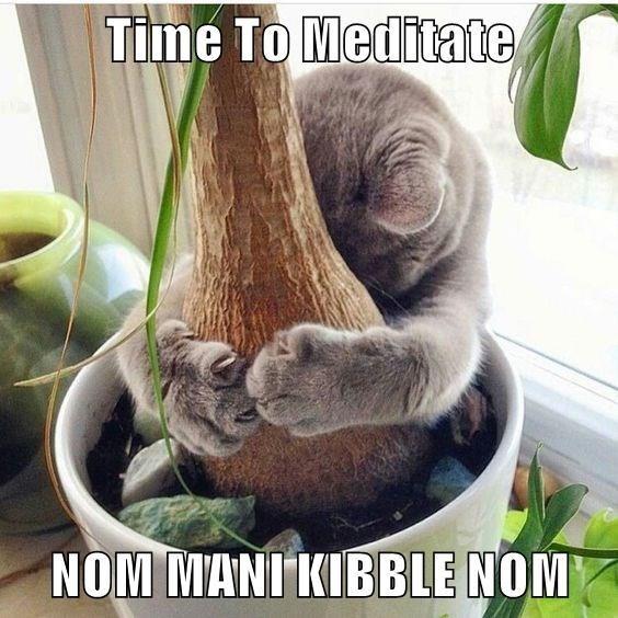Photo caption - Time To Meditate NOM MANI KIBBLE NOM