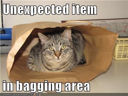 Cat - Unexpected item in bagging area OCANHASCHEE2EURGER 0OM