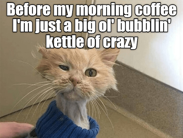 Cat - Before my morning coffee I'm just a big or bubblin' kettle of crazy