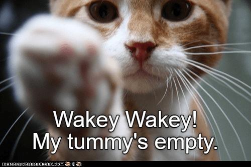 Cat - Wakey Wakey! My tummy's empty. CANHASCHEE2EURGER cOM