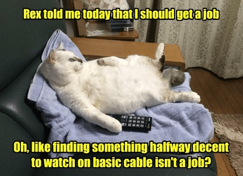 Photo caption - Rextold me todaythatIshould getajob Oh, like finding something halfwaydecent to watch on basic cable isn't a job?