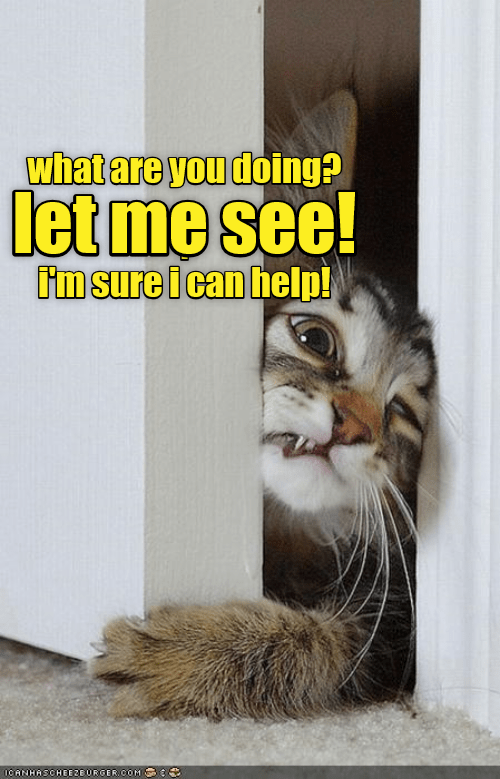 Cat - what are you doing? let me see! Im sure i can help! ICANHASCHEE2EURGER COM