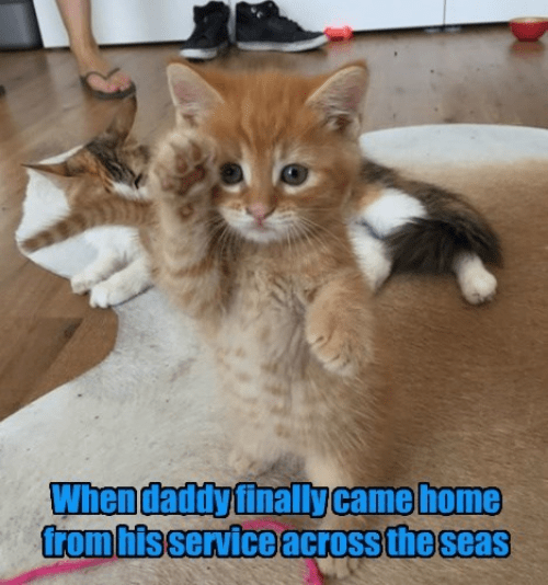 Cat - When daddy finally came home from hisserviceacross the seas