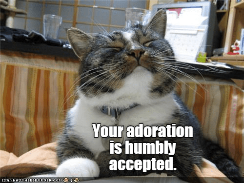 Cat - Your adoration is humbly accepted. ICANHASCHEE2EURGER0OM
