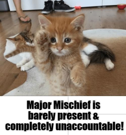 Cat - Major Mischief is barely present & completely unaccountable!