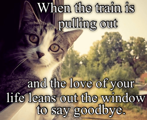Cat - When the train is pulling out and the love of your life leans out the window to say goodbye.