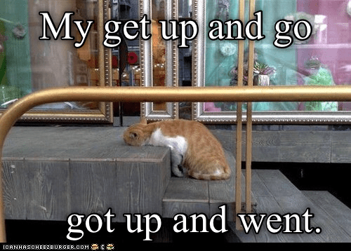 Cat - My get up and go got up and went. ICANHASCHEE2EURGER cOM