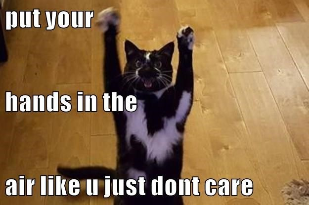 Cat - put your hands in the air like u just dont care