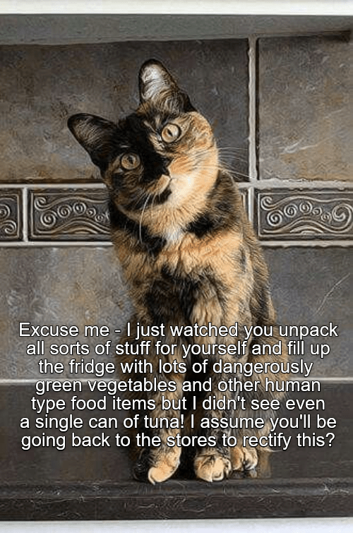 Cat - Excuse me just watched you unpack all sorts of stuff for yourself and fill up the fridge with lots of dangerously green vegetables and other human type food items but I didn't see even a single can of tuna! I assume you'll be going back to the stores to rectify this?