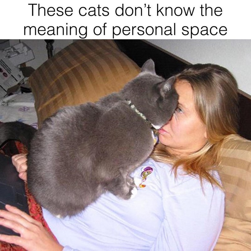 Cat - These cats don't know the meaning of personal space