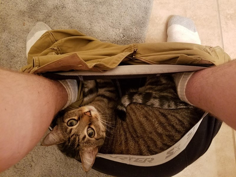 Cat - ER