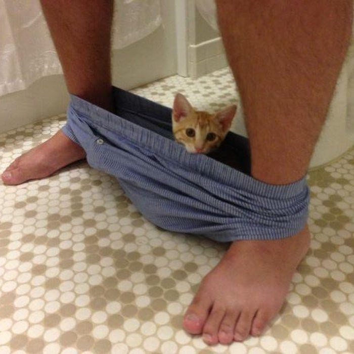 cat inside a persons underwear while he goes to the bathroom
