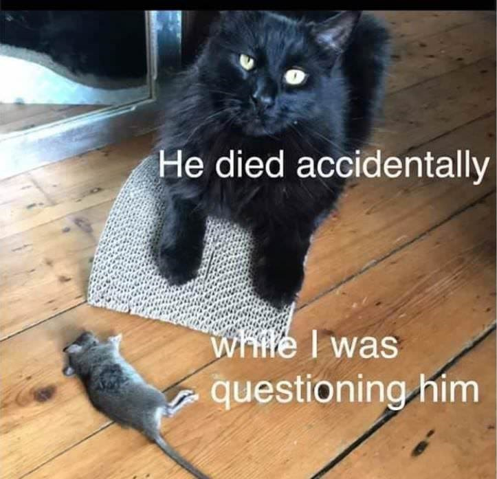 Cat - He died accidentally whfle I was questioning him
