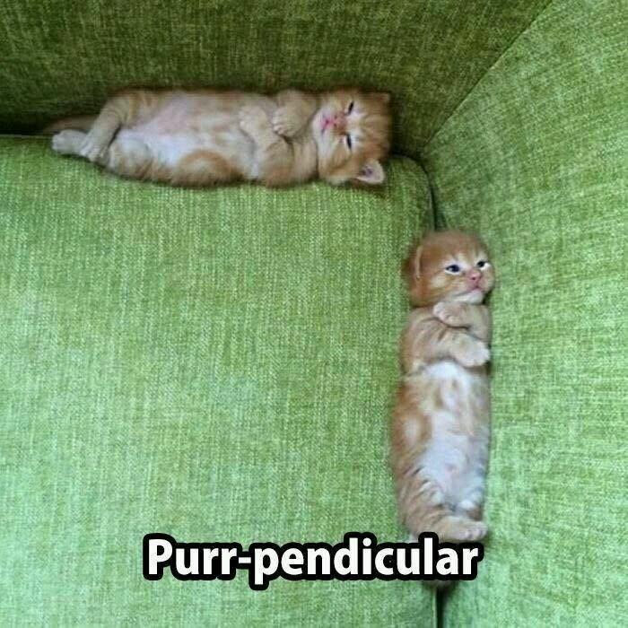 Cat - Purr-pendicular