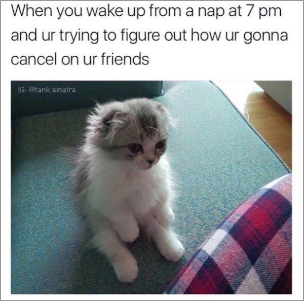 Cat - When you wake up from a nap at 7 pm and ur trying to figure out how ur gonna cancel on ur friends IG: @tank.sinatra