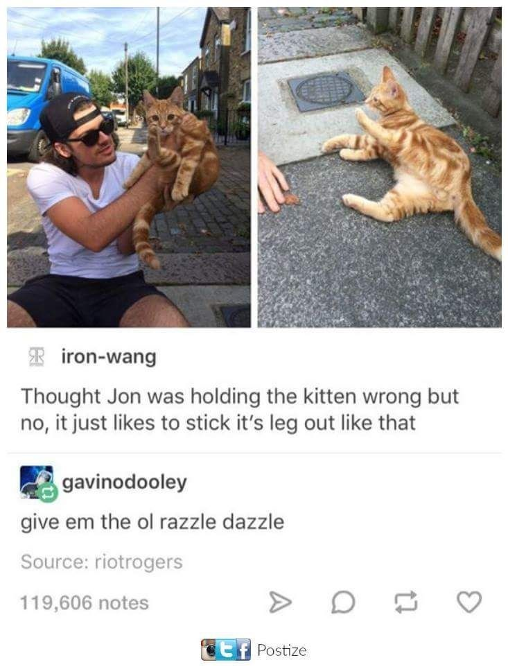 Organism - iron-wang Thought Jon was holding the kitten wrong but no, it just likes to stick it's leg out like that gavinodooley give em the ol razzle dazzle Source: riotrogers 119,606 notes Postize