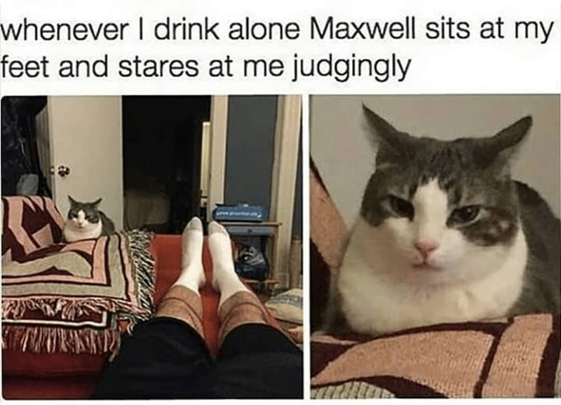 Cat - whenever I drink alone Maxwell sits at my feet and stares at me judgingly