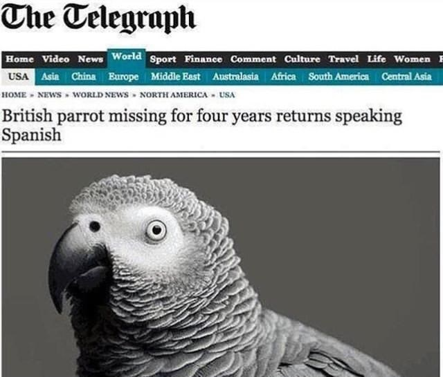 "Telegraph headline that reads, ""British parrot missing for four years returns speaking Spanish"""