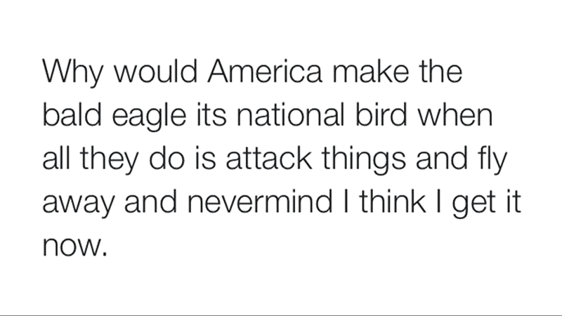 meme - Text - Why would America make the bald eagle its national bird when all they do is attack things and fly away and nevermind I think I get it now