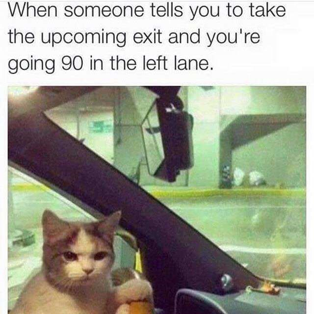meme - Cat - When someone tells you to take the upcoming exit and you're going 90 in the left lane.