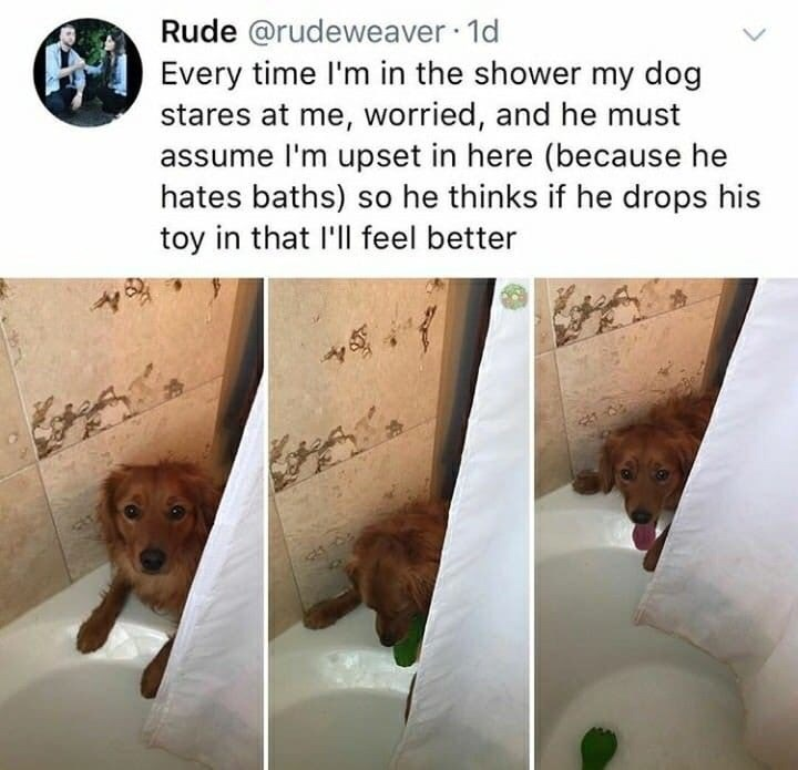 Text - Rude @rudeweaver 1o Every time I'm in the shower my dog stares at me, worried, and he must ssume I'm upset in here (because he hates baths) so he thinks if he drops his toy in that I'll feel better