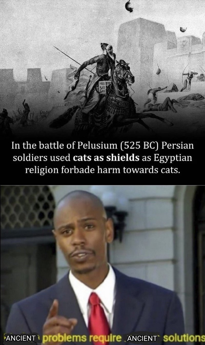 Text - In the battle of Pelusium (525 BC) Persian soldiers used cats as shields as Egyptian religion forbade harm towards cats. ANCIENT problems require.ANCIENT Solutions