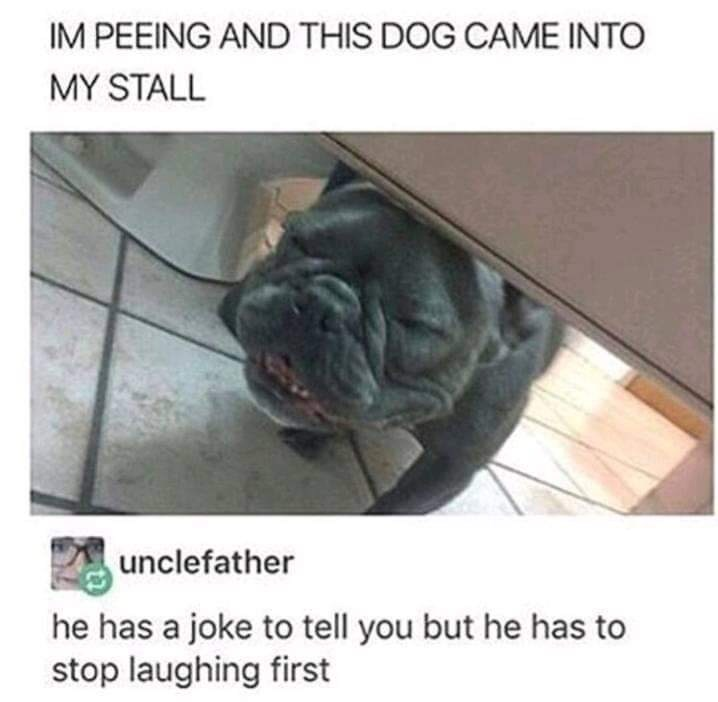 Dog breed - IM PEEING AND THIS DOG CAME INTO MY STALL unclefather he has a joke to tell you but he has to stop laughing first