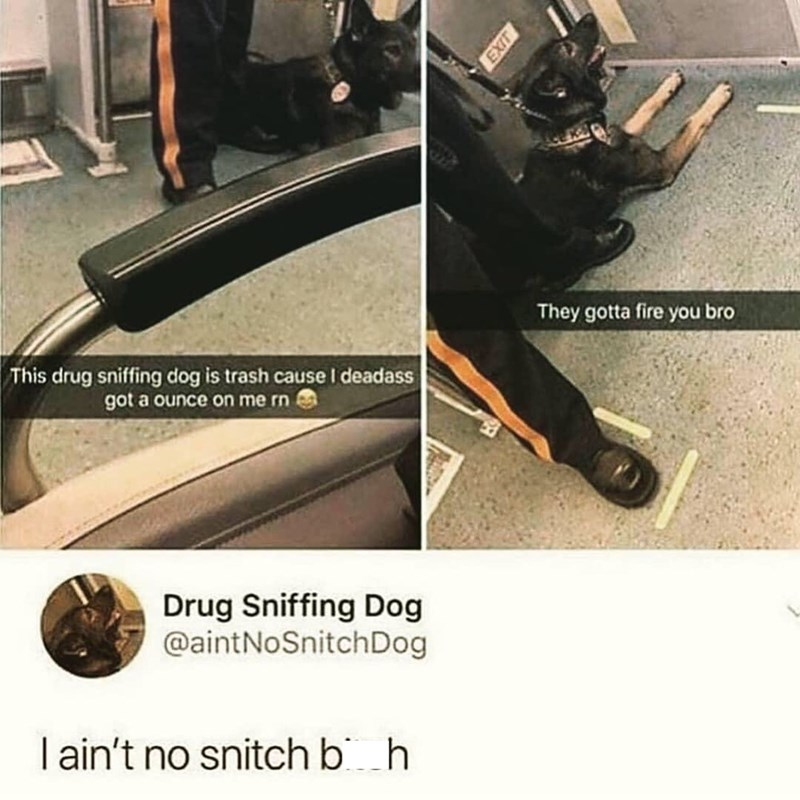 Product - They gotta fire you bro This drug sniffing dog is trash cause I deadass got a ounce on me rn Drug Sniffing Dog @aintNoSnitchDog I ain't no snitch b h