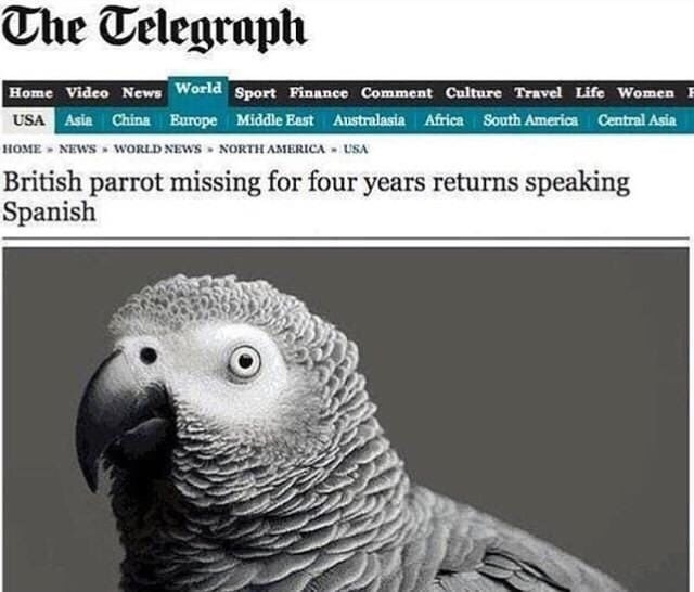 Vertebrate - The Telegraph Home Video News World Sport Finance Comment Culture Travel Life Women USA Asia China Europe Middle East Australasia Africa South America Central Asia HOME NEWS WORLD NEWS NORTH AMERICA USA British parrot missing for four years returns speaking Spanish