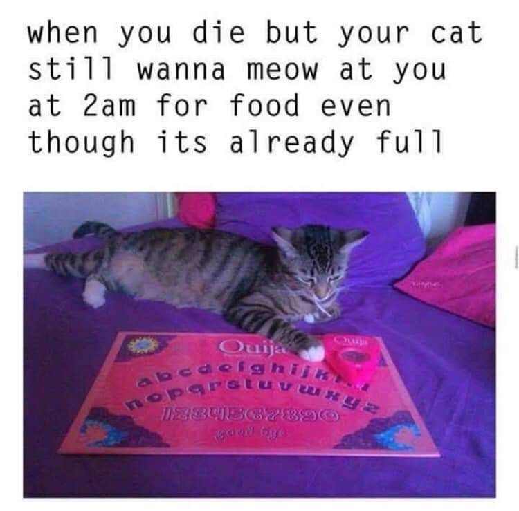 Cat - when you die but your cat still wanna meow at you at 2am for food even though its already ful1 Quija abcaeighijk OParGtuvxyN Ma84862890