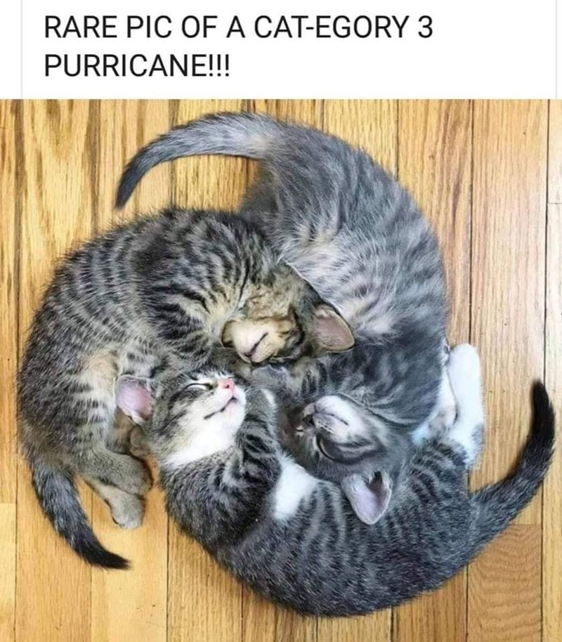 Cat - RARE PIC OFA CAT-EGORY 3 PURRICANE!!!