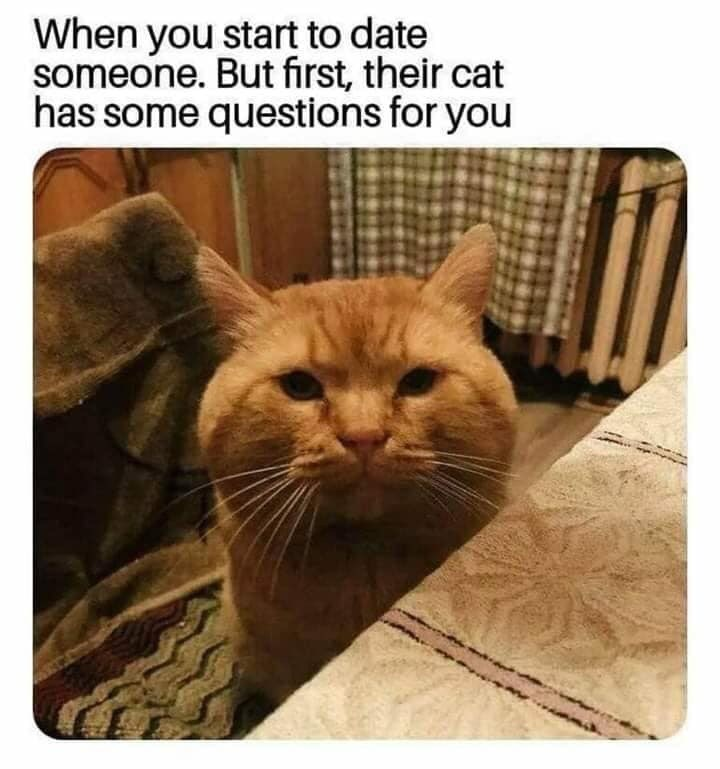 Cat - When you start to date someone. But first, their cat has some questions for you