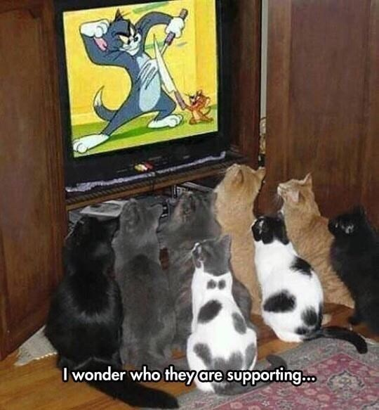 "Pic of a bunch of cats gathered around a TV showing 'Tom and Jerry' with caption that reads, ""I wonder who they are supporting"""