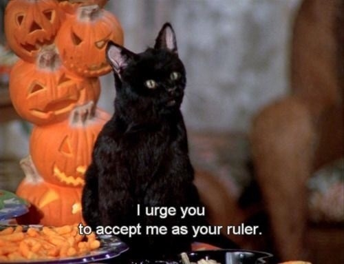 Cat - T urge you to accept me as your ruler.