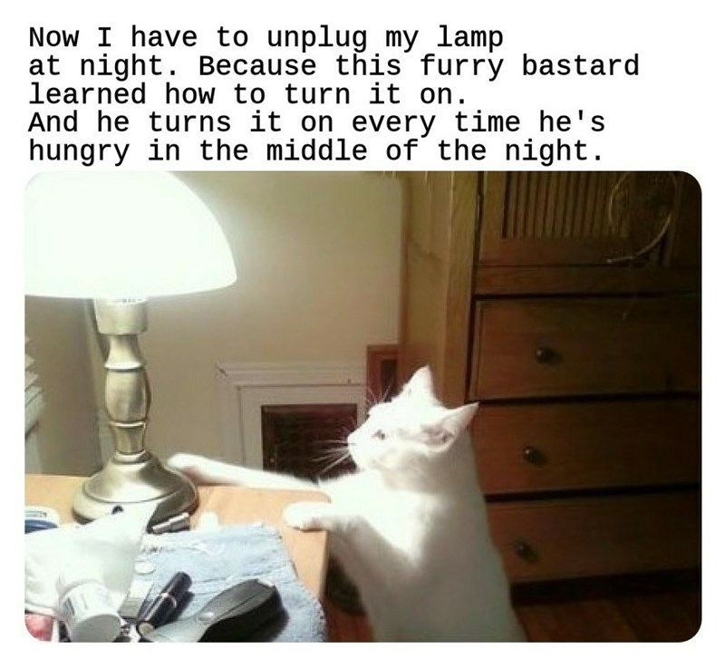 "Caption that reads, ""Now I have to unplug my lamp at night. Because this furry bastard learned how to turn it on. And he turns it on every time he's hungry in the middle of the night"" above a pic of a cat trying to turn on a lamp"