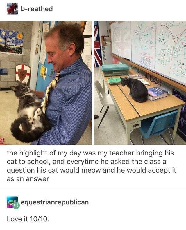 Organism - b-reathed the highlight of my day was my teacher bringing his cat to school, and everytime he asked the class a question his cat would meow and he would accept it as an answer equestrianrepublican Love it 10/10.