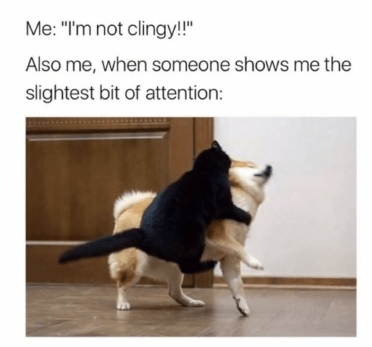 "Caption that reads, ""Me: I'm not clingy! Also me, when someone shows me the slightest bit of attention: ..."" above a pic of a cat seeming to attack a shiba inu"