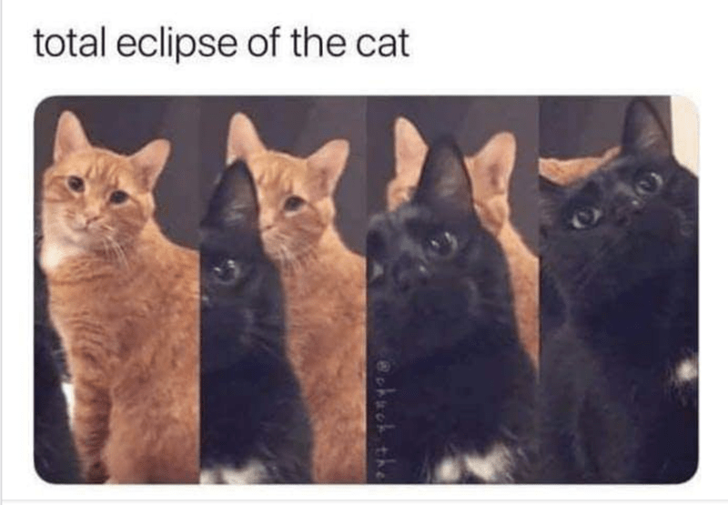 Cat - total eclipse of the cat check the