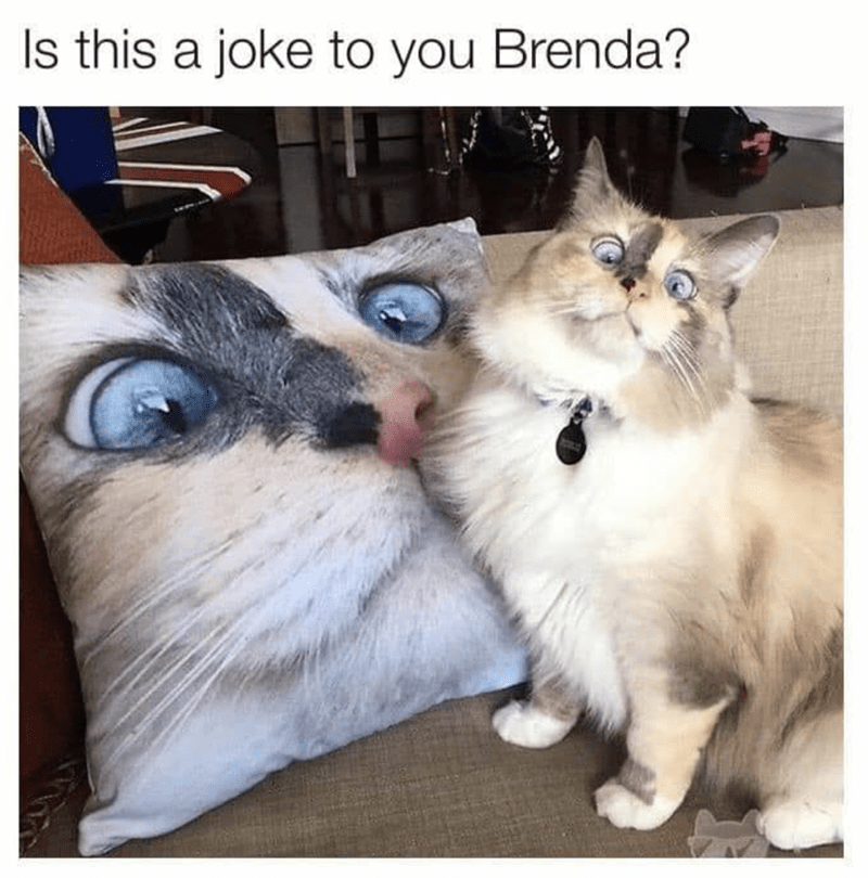 Cat - ls this a joke to you Brenda?