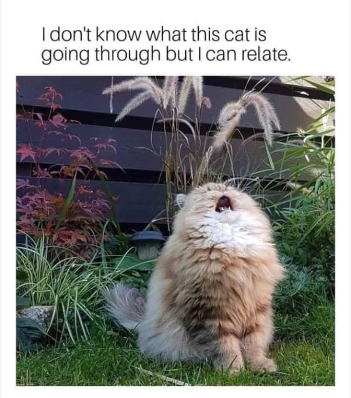 Adaptation - Idon't know what this cat is going through but I can relate.