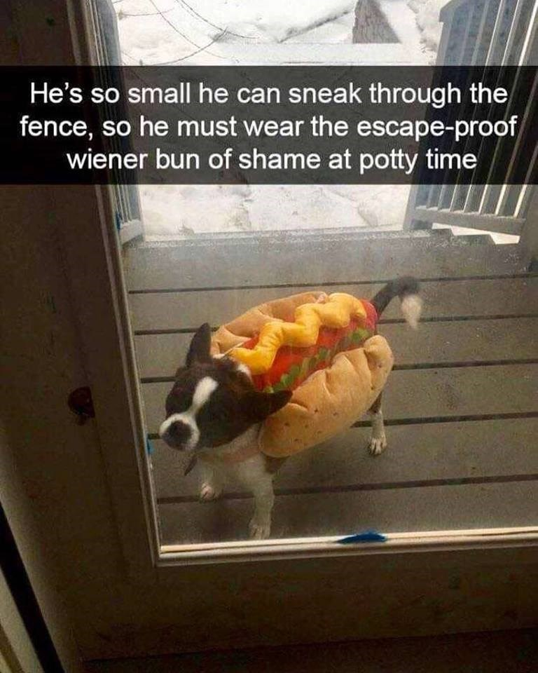 """Pic of a little dog wearing a hot dog costume with Snapchat caption that reads, """"He's so small he can sneak through the fence, so he must wear the escape-proof wiener bun of shame at potty time"""""""