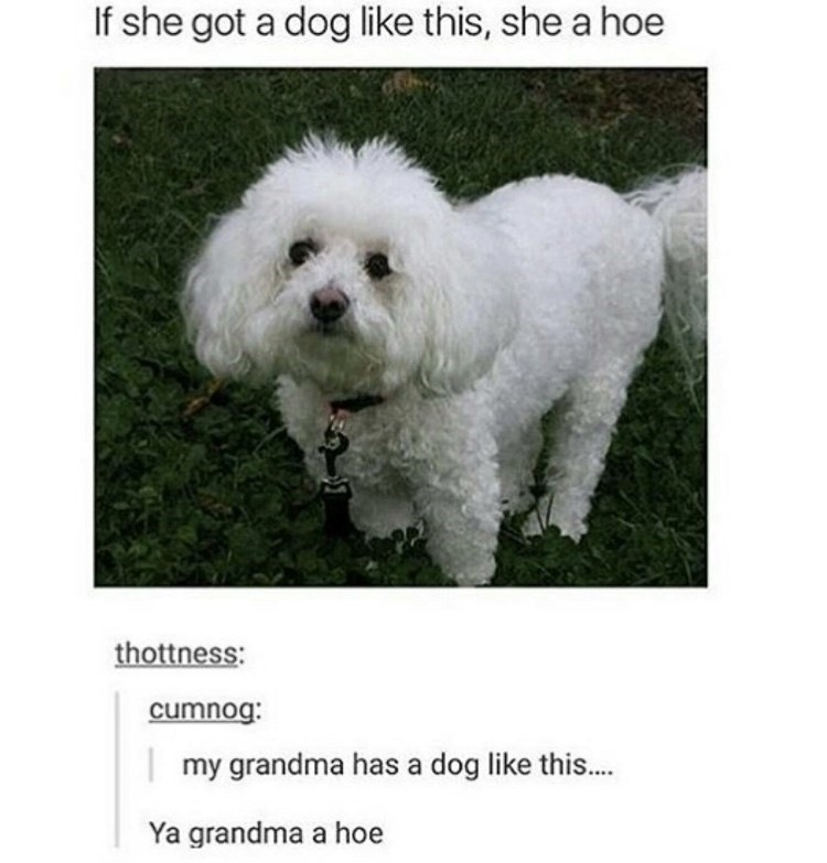 Dog - If she got a dog like this, she a hoe thottness: cumnog: my grandma has a dog like this... Ya grandma a hoe