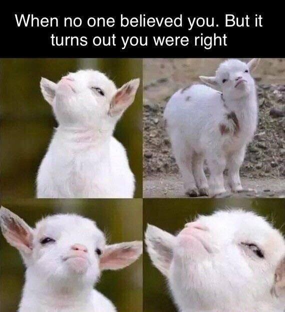 """Caption that reads, """"When no one believed you, but it turns out you were right"""" above pics of a baby goat looking smug"""