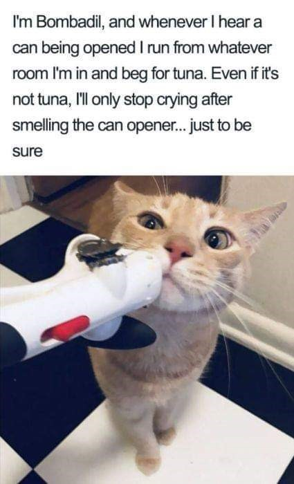 Cat - I'm Bombadil, and whenever I hear a can being opened I run from whatever room I'm in and beg for tuna. Even if it's not tuna, l only stop crying after smelling the can opener.. just to be sure