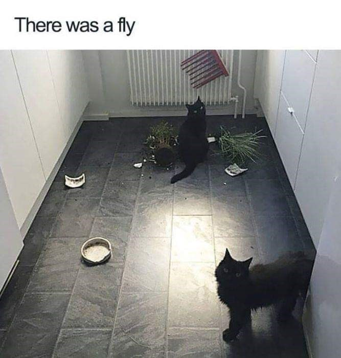 Cat - There was a fly